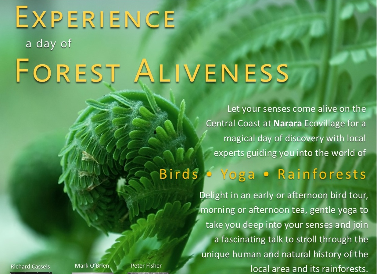 Forest Aliveness: Birds, Yoga, Rainforest
